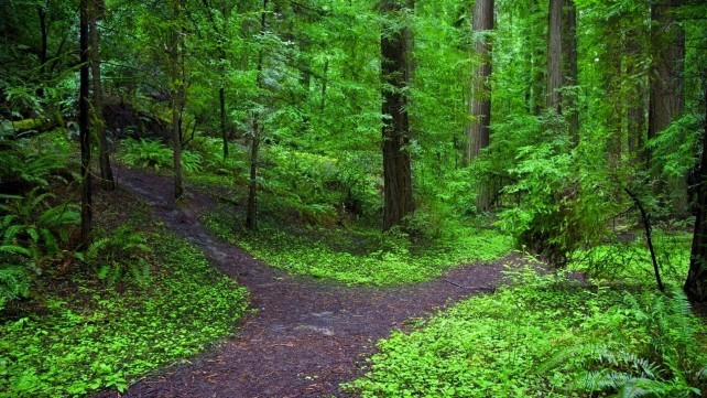 forest-path_00290056